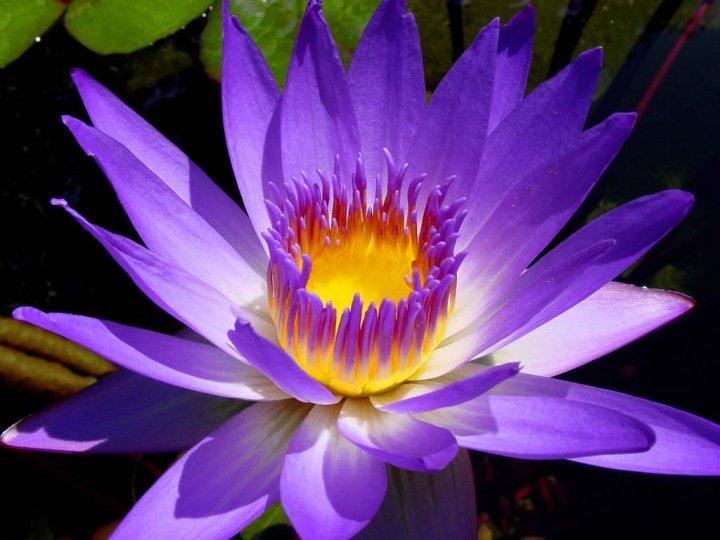 Lotus flower holistic massage